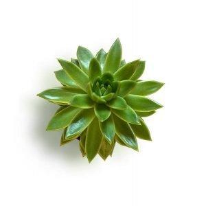 item cover cactus