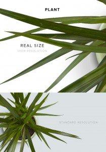 item description plant
