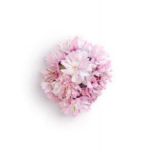 item cover blossom 2