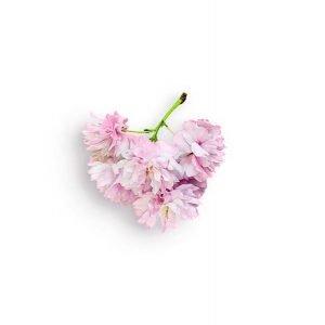 item cover blossom branch 2