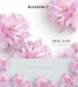 item description blossom 1