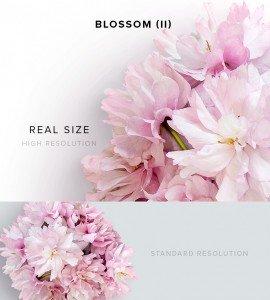 item description blossom 2