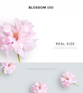 item description blossom 3