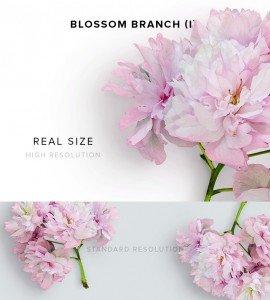item description blossom branch 1