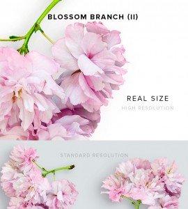 item description blossom branch 2