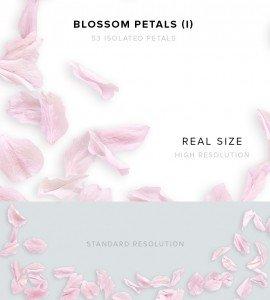 item description blossom petals 1