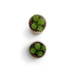 item cover small cactus 2