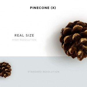 item description pinecone 101