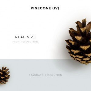 item description pinecone 4
