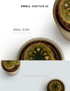 item description small cactus 1