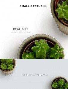 item description small cactus 2