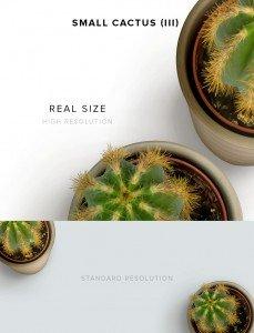 item description small cactus 3