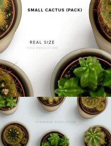 item description small cactus pack