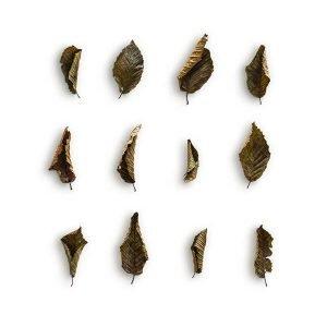 item cover hornbeam 4 leaves pack