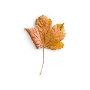 item cover maple 1 leaf 2