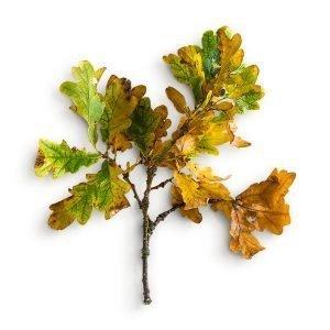 item cover oak stick leaves 3