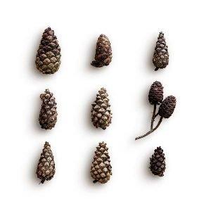 item cover pinecones pack