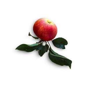 item cover red apple with stem 1