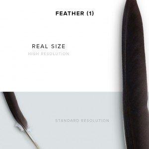 item description feather 1