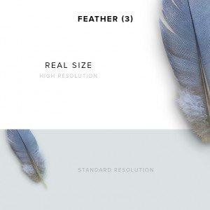 item description feather 3
