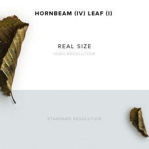 item description hornbeam 4 leaf 1