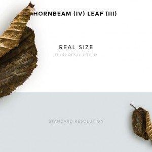 item description hornbeam 4 leaf 3