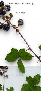item description leather blackberries and leaves 1