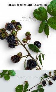 item description leather blackberries and leaves 2