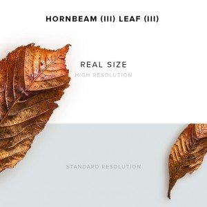 item description leather hornbeam 3 leaf 3