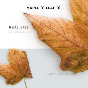 item description maple 1 leaf 1