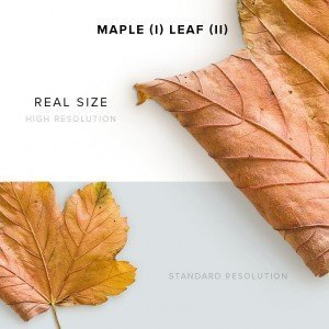 item description maple 1 leaf 2