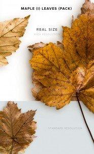 item description maple 1 leaves pack