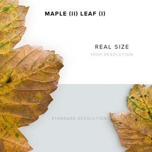 item description maple 2 leaf 1