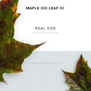 item description maple 3 leaf 1
