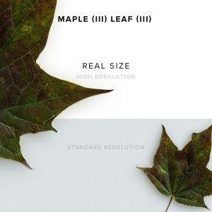 item description maple 3 leaf 3