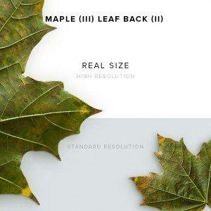 item description maple 3 leaf back 2