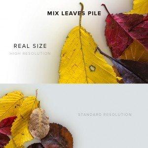 item description mix leaves pack pile