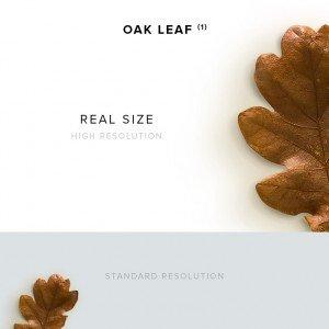 item description oak leaf 1