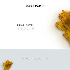 item description oak leaf 2