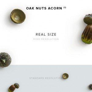 item description oak nuts acorn 1