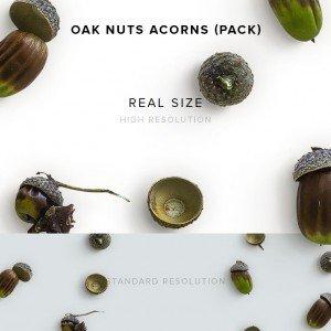 item description oak nuts acorns pack