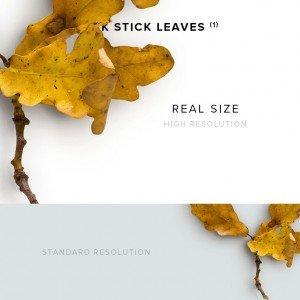 item description oak stick leaves 1