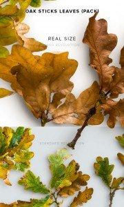 item description oak sticks leaves pack