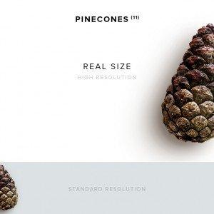 item description pinecone 11