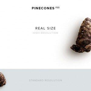 item description pinecone 12