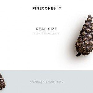 item description pinecone 13