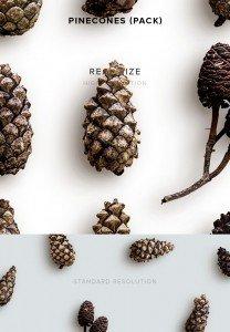 item description pinecones pack