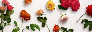 flower edition vol1 custom scene example 1