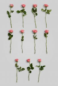 flower edition vol1 custom scene list item roses 1