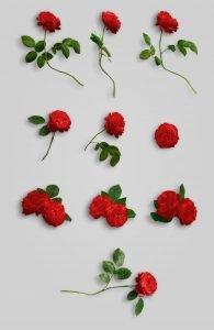 flower edition vol1 custom scene list item roses 3
